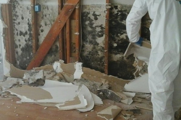 mold damage green bay remediation services